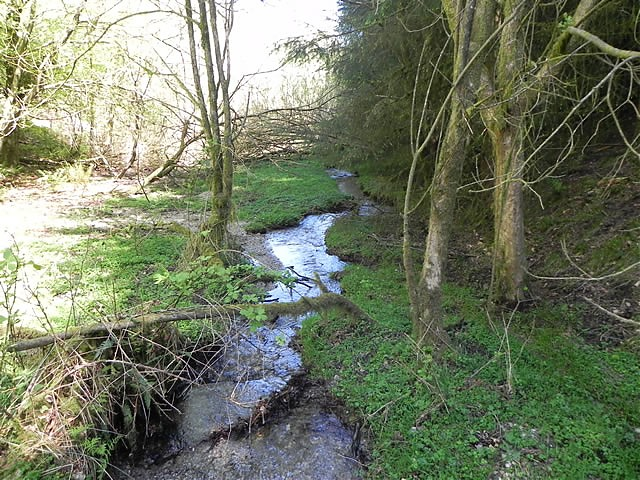 Flowing through Colyhill Wood