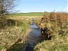 Litton Water joins with stream from Halscombe Alotment  to form Danes Brook