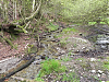 Flowing through Colyhill Woods