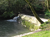 Hapsford Mill Weir