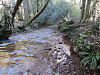Flowing through Hodder's Combe