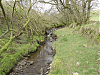 Upstream from Willingford Farm