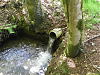 Colyhill Woods culvert outlet