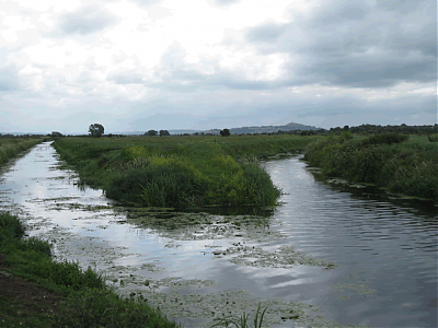 Looking upstream from join with River Brue