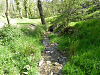 Flowing through Treborough Plantation