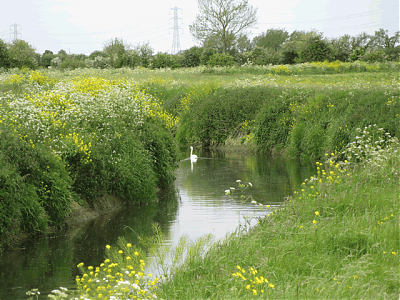 Downstream from Meare Bridge